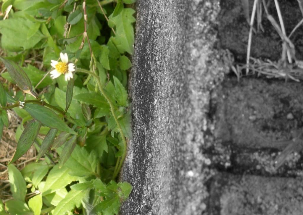 I love to take these random geometric shots.