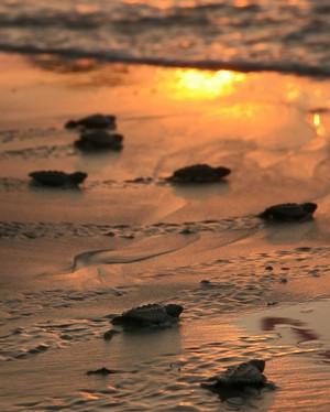 The fate of Sea Turtles in Sri Lanka