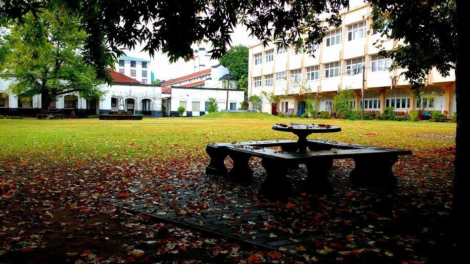 Musings of an undergraduate