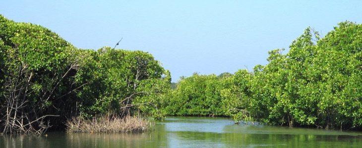 The Mangroves of Muthurajawela