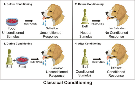 Was Pavlov S Dog Experiment Classical Conditioning