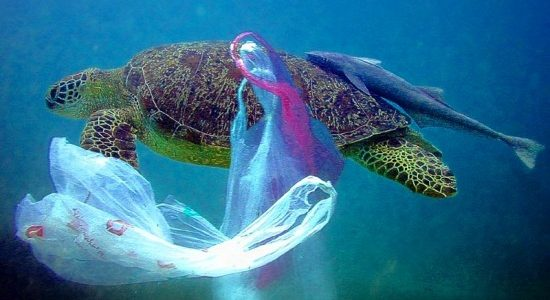 The horrific life story of our daily used plastics