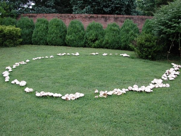 Fascinating Fairy Rings!