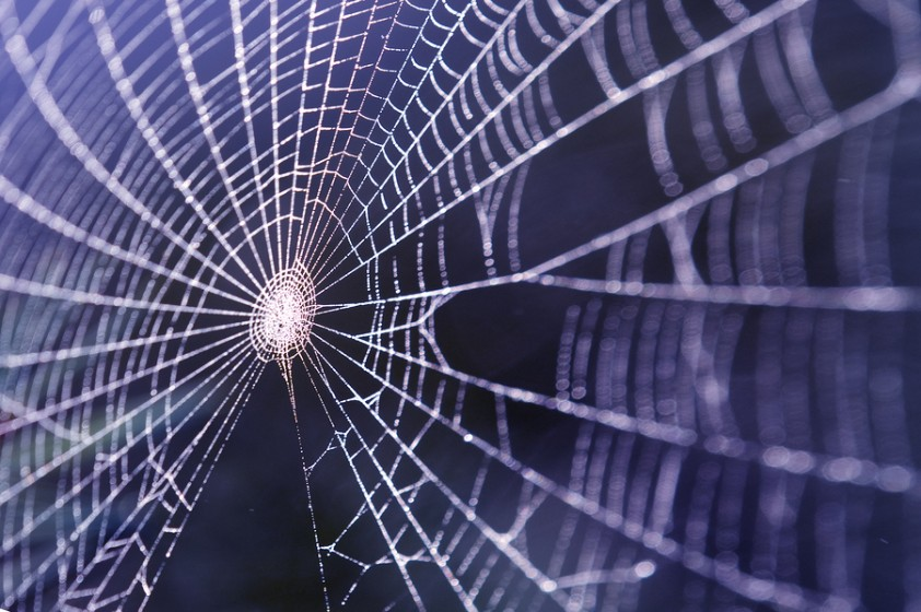 Amazing healing effects of spider webs