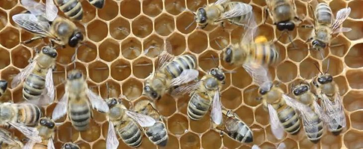 Bees like to move it, move it…