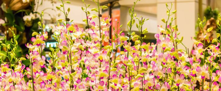 The Stunning Orchids