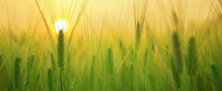 Climate change and its impact on crops