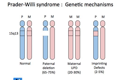 Prader-Willi syndrome : Generic mechanisms