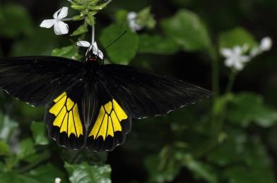Let's Talk Butterflies