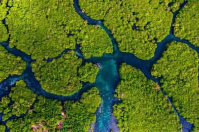 Guardians of the Coasts: World Mangrove Day 2021